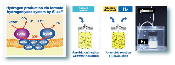 hydrogen production from biomass by the