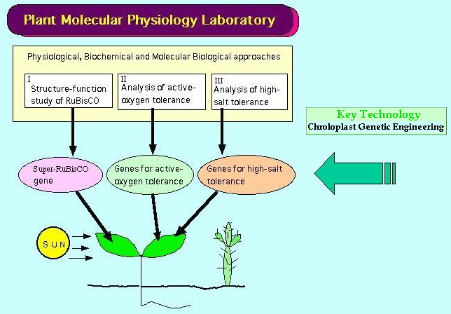 plant physiology mineral nutrition laboratory report Mcq on plant physiology - mineral nutrition ~ mcq , physiology mineral of plants ,biology multiple choice questions and answers for different competitive examsthe physiology of metal toxicity in plants - ,physiology of fe toxicity , the physiology of metal toxicity in plants 513 , or other mineral elements may limit plant growth.