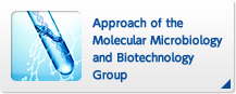 Approach of the Molecular Microbiology and Biotechnology Group