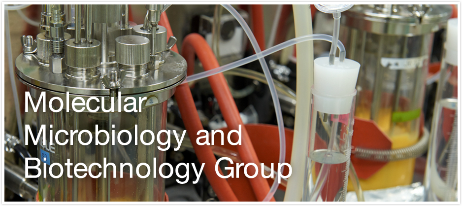 Molecular Microbiology and Biotechnology Group